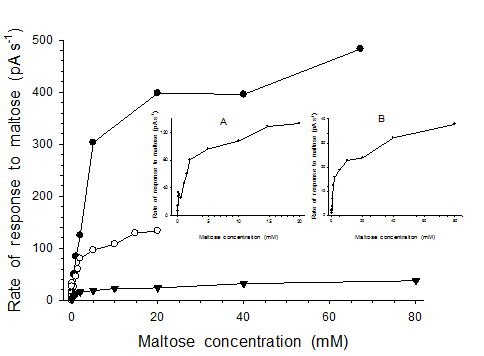Dependence of the rate of the biosensor response on maltose concentration
