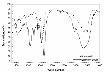 Infrared spectra of the two exopolymers